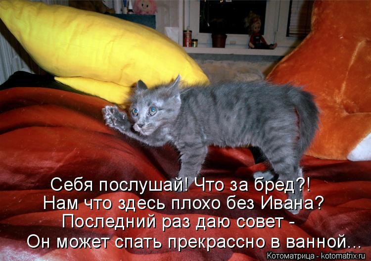 Котоматрица: Себя послушай! Что за бред?! Нам что здесь плохо без Ивана? Последний раз даю совет - Он может спать прекрассно в ванной...