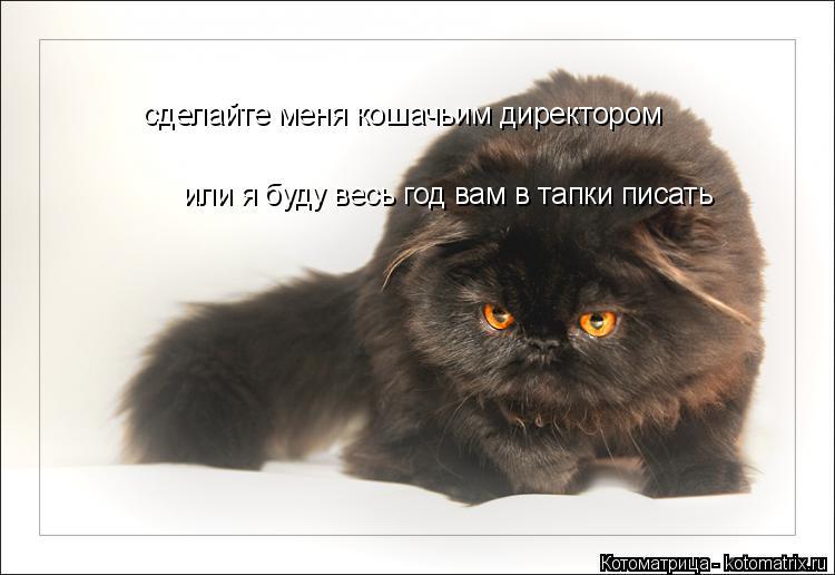 Котоматрица: сделайте меня кошачьим директором или я буду весь год вам в тапки писать