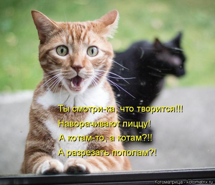 Котоматрица: Ты смотри-ка, что творится!!! Наворачивают пиццу! А котам-то, а котам?!! А разрезать пополам?!