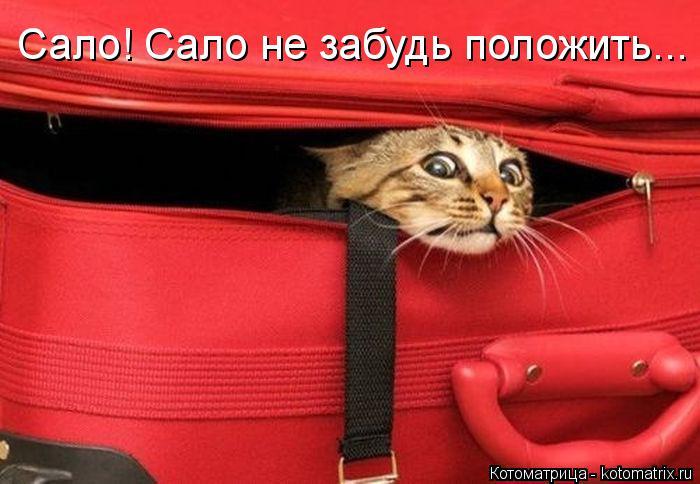 Котоматрица: Сало! Сало не забудь положить...