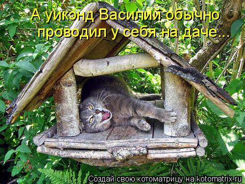 Котоматрица: А уикэнд Василий обычно  проводил у себя на даче...