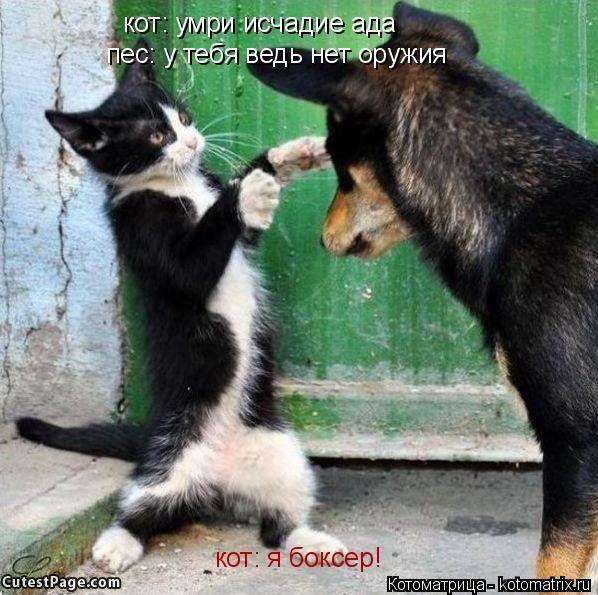 Котоматрица: кот: умри исчадие ада  пес: у тебя ведь нет оружия кот: я боксер!