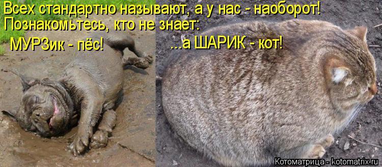 Котоматрица: Всех стандартно называют, а у нас - наоборот! Познакомьтесь, кто не знает:  МУРЗик - пёс! ...а ШАРИК - кот!