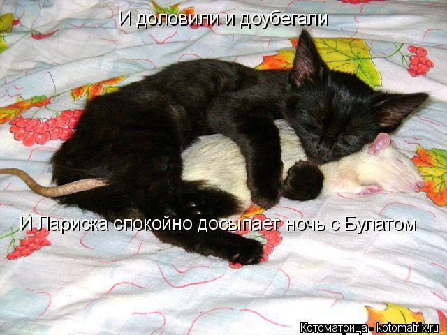 Котоматрица: И доловили и доубегали И Лариска спокойно досыпает ночь с Булатом