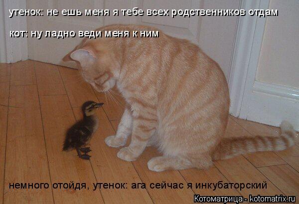 Котоматрица: утенок: не ешь меня я тебе всех родственников отдам кот: ну ладно веди меня к ним немного отойдя, утенок: ага сейчас я инкубаторский