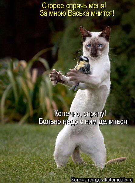 Котоматрица: Скорее спрячь меня! За мною Васька мчится! Конечно, спрячу! Больно надо с ним делиться!