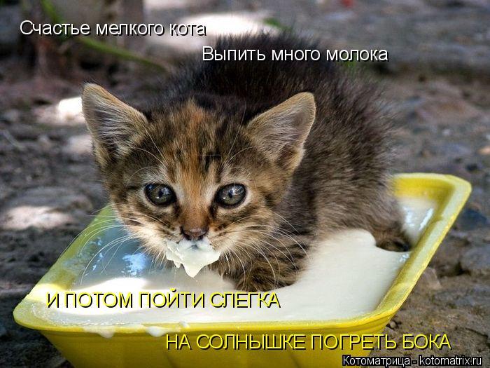 Котоматрица: Счастье мелкого кота Выпить много молока И ПОТОМ ПОЙТИ СЛЕГКА НА СОЛНЫШКЕ ПОГРЕТЬ БОКА