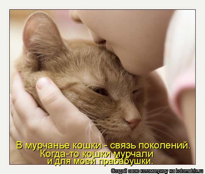 Котоматрица: В мурчанье кошки - связь поколений. Когда-то кошки мурчали и для моей прабабушки.