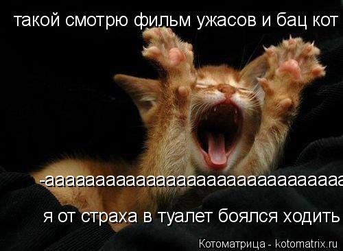 Котоматрица: такой смотрю фильм ужасов и бац кот -аааааааааааааааааааааааааааааааааааааааааааааааааааааааааааа я от страха в туалет боялся ходить