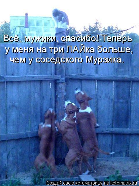 Котоматрица: Всё, мужики, спасибо! Теперь у меня на три ЛАЙка больше, чем у соседского Мурзика.