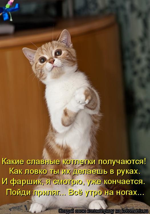 Котоматрица: Какие славные котлетки получаются! Как ловко ты их делаешь в руках. И фаршик, я смотрю, уже кончается. Пойди приляг... Всё утро на ногах...