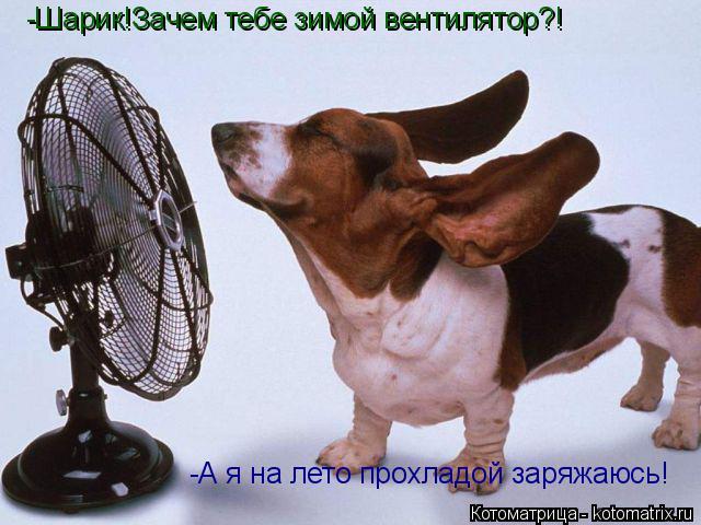 Котоматрица: -Шарик!Зачем тебе зимой вентилятор?! -А я на лето прохладой заряжаюсь!