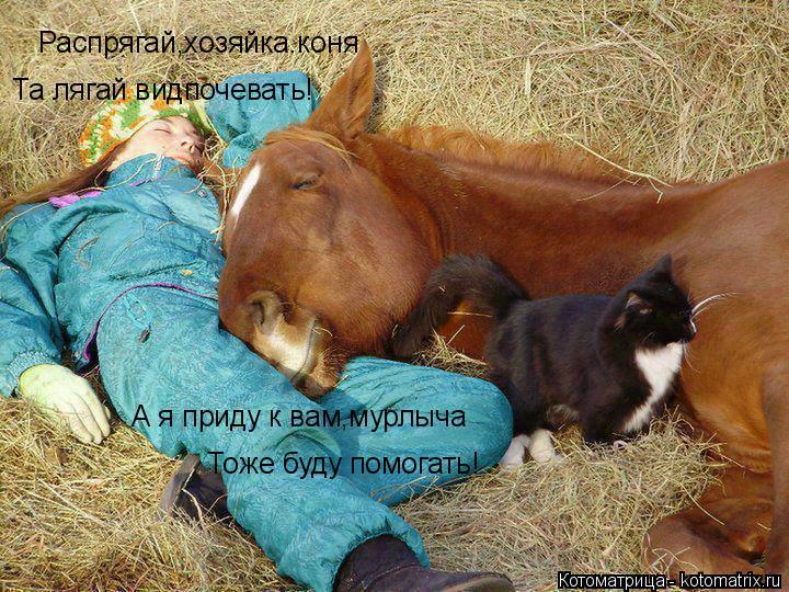 Котоматрица: Распрягай,хозяйка.коня Та лягай видпочевать! А я приду к вам,мурлыча Тоже буду помогать!