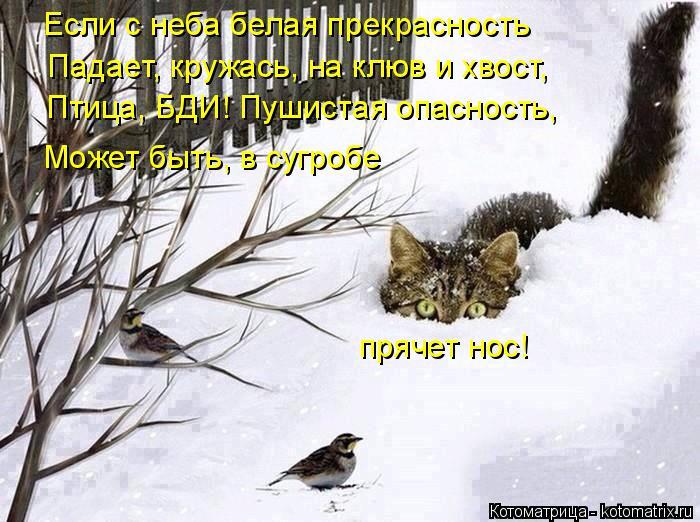 Котоматрица: Если с неба белая прекрасность Падает, кружась, на клюв и хвост, Птица, БДИ! Пушистая опасность, Может быть, в сугробе прячет нос!