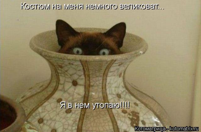 Котоматрица: Костюм на меня немного великоват... Я в нем утопаю!!!!