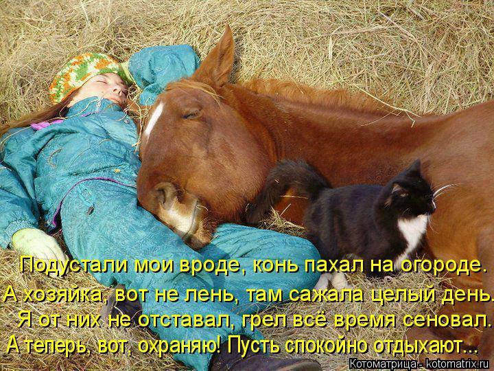 Котоматрица: Подустали мои вроде, конь пахал на огороде.  А хозяйка, вот не лень, там сажала целый день. Я от них не отставал, грел всё время сеновал. А тепе