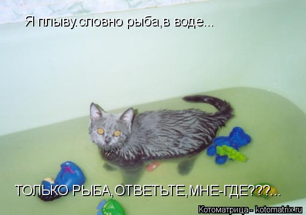 Котоматрица: Я плыву.словно рыба,в воде... ТОЛЬКО РЫБА,ОТВЕТЬТЕ,МНЕ-ГДЕ???...