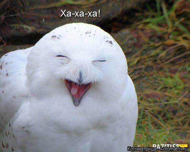 Котоматрица: Ха-ха-ха!