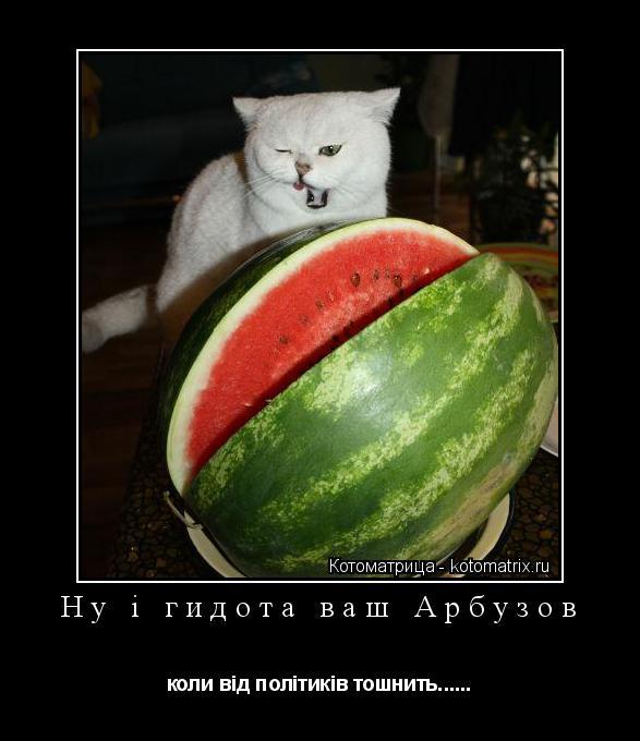Котоматрица: Ну і гидота ваш Арбузов коли від політиків тошнить......