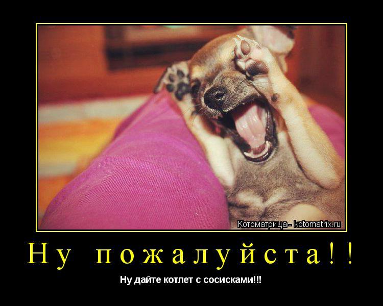 Котоматрица: Ну пожалуйста!! Ну дайте котлет с сосисками!!!