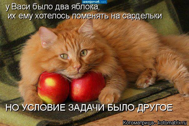 Котоматрица: у Васи было два яблока, их ему хотелось поменять на сардельки НО УСЛОВИЕ ЗАДАЧИ БЫЛО ДРУГОЕ
