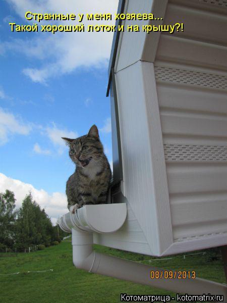 Котоматрица: Странные у меня хозяева... Такой хороший лоток и на крышу?!