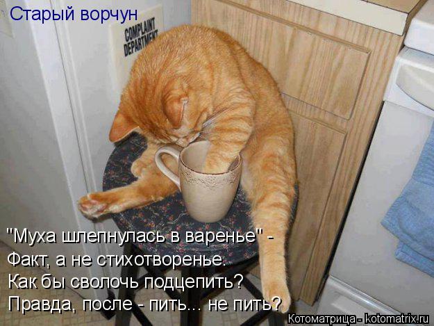 """Котоматрица: """"Муха шлепнулась в варенье"""" - Факт, а не стихотворенье. Как бы сволочь подцепить? Правда, после - пить... не пить? Старый ворчун"""
