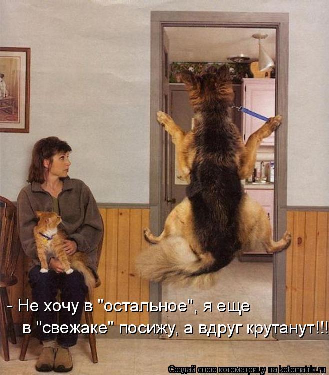 """Котоматрица: - Не хочу в """"остальное"""", я еще  в """"свежаке"""" посижу, а вдруг крутанут!!!"""