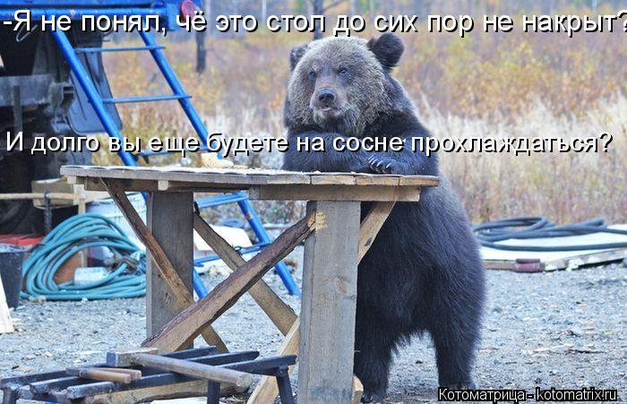 Котоматрица: -Я не понял, чё это стол до сих пор не накрыт?  И долго вы еще будете на сосне прохлаждаться?