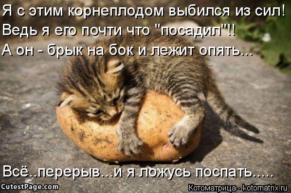 """Котоматрица: Я с этим корнеплодом выбился из сил! Ведь я его почти что """"посадил""""!! А он - брык на бок и лежит опять... Всё..перерыв...и я ложусь поспать....."""