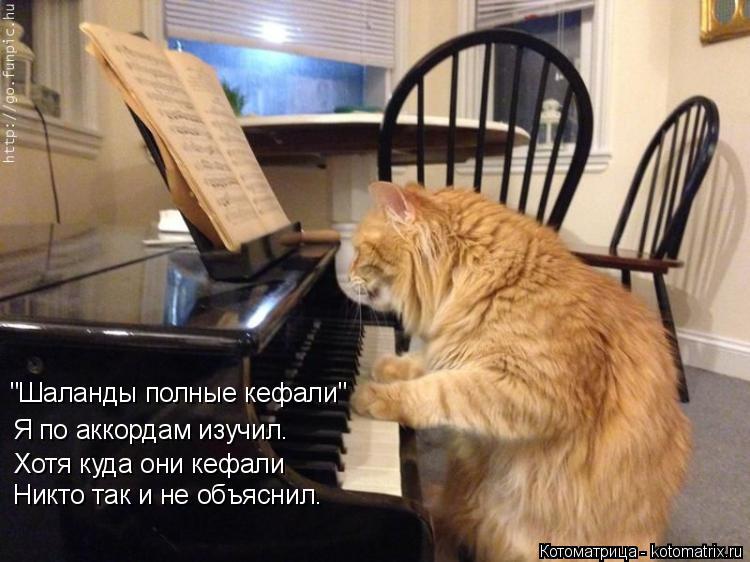 """Котоматрица: """"Шаланды полные кефали"""" Я по аккордам изучил. Хотя куда они кефали Никто так и не объяснил."""