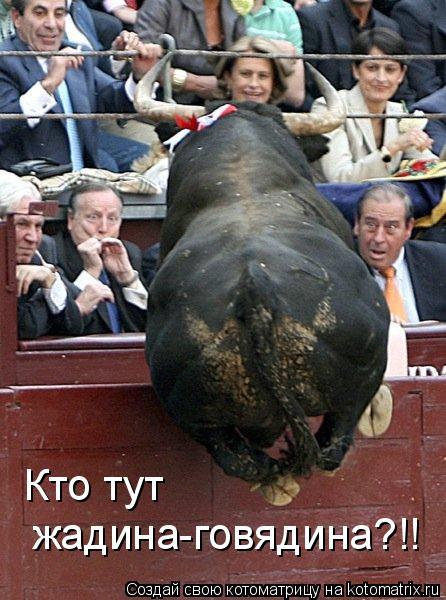 Котоматрица: Кто тут  жадина-говядина?!!
