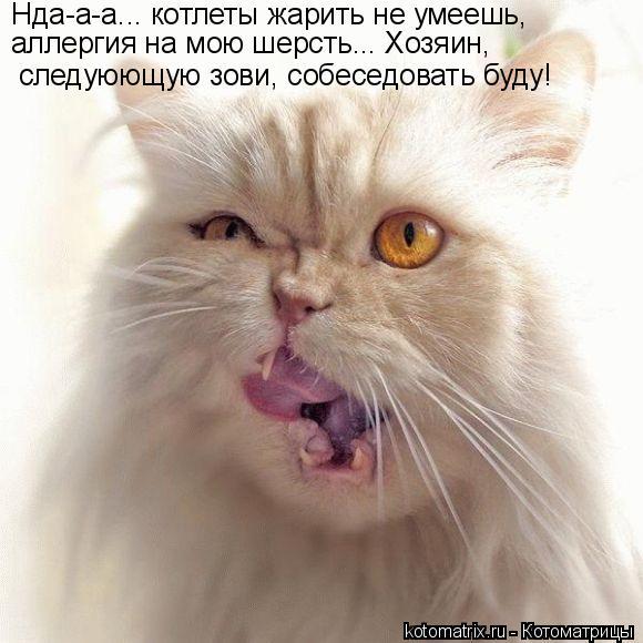 Котоматрица: Нда-а-а... котлеты жарить не умеешь,  аллергия на мою шерсть... Хозяин,  следуюющую зови, собеседовать буду!