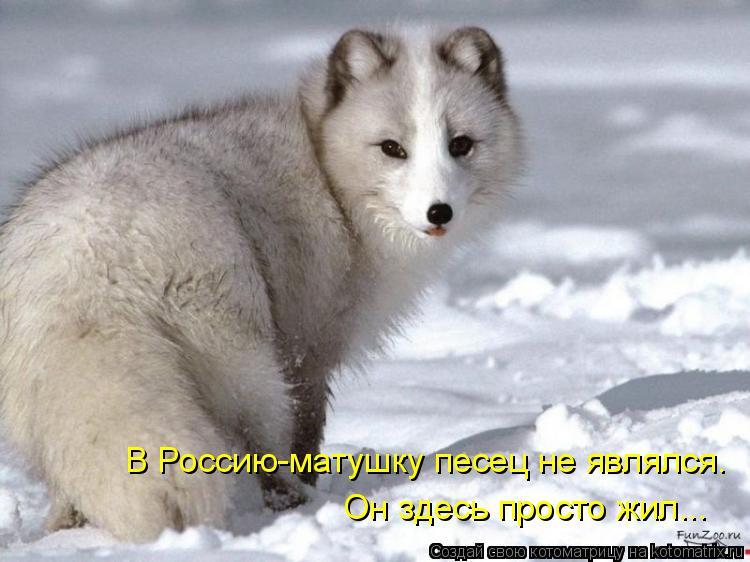 Котоматрица: В Россию-матушку песец не являлся. Он здесь просто жил...