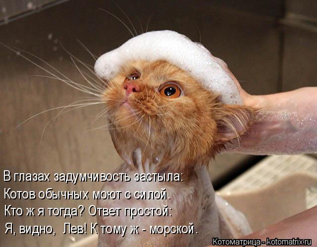 Котоматрица: Я, видно,  Лев! К тому ж - морской. Кто ж я тогда? Ответ простой: В глазах задумчивость застыла: Котов обычных моют с силой.