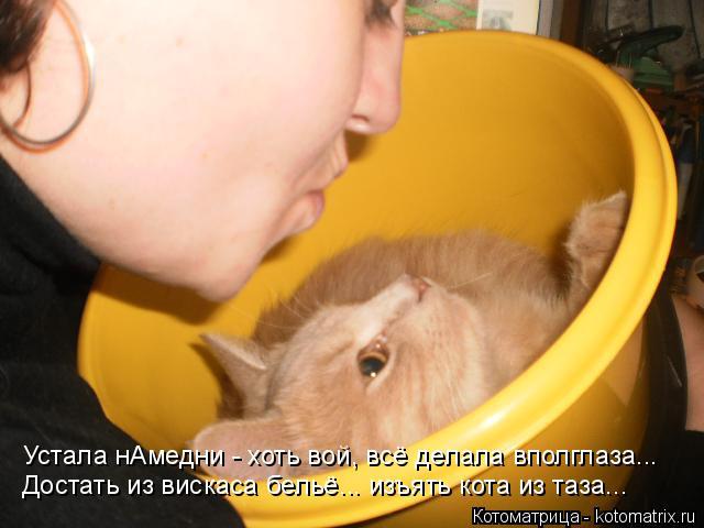 Котоматрица: Достать из вискаса бельё... изъять кота из таза... Устала нАмедни - хоть вой, всё делала вполглаза...