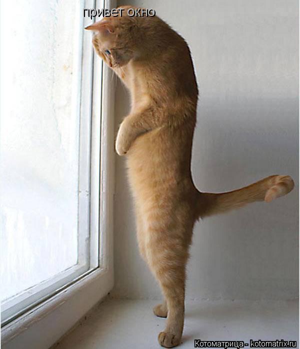 Котоматрица: привет окно