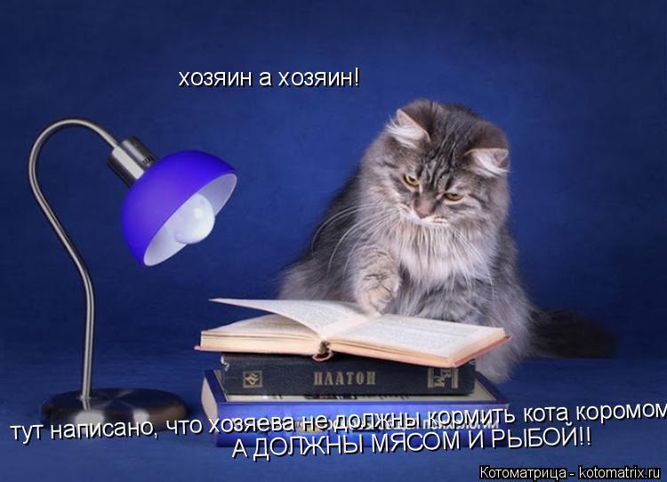 Котоматрица: хозяин а хозяин!  тут написано, что хозяева не должны кормить кота коромом А ДОЛЖНЫ МЯСОМ И РЫБОЙ!!