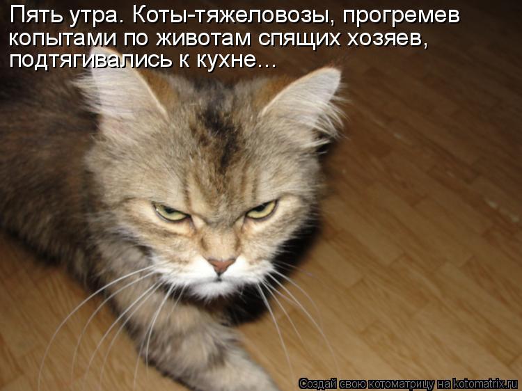 Котоматрица: Пять утра. Коты-тяжеловозы, прогремев  копытами по животам спящих хозяев,  подтягивались к кухне...