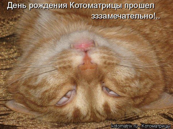 Котоматрица: День рождения Котоматрицы прошел  зззамечательно!..
