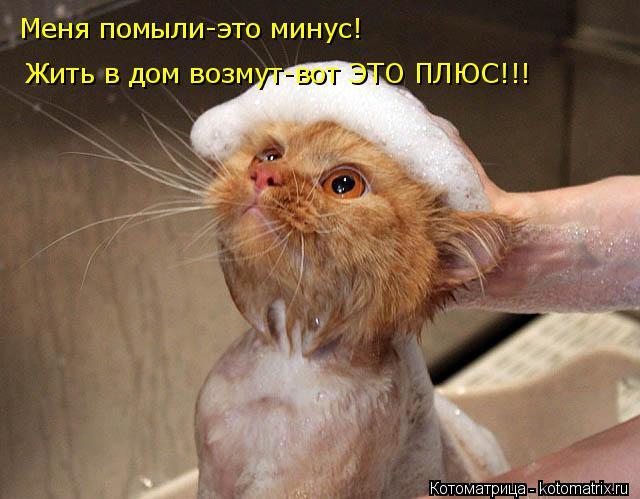 Котоматрица: Меня помыли-это минус! Жить в дом возмут-вот ЭТО ПЛЮС!!!