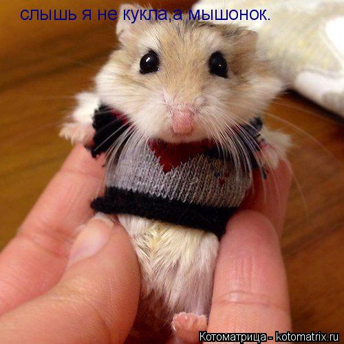 Котоматрица: слышь я не кукла,а мышонок.