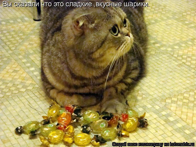Котоматрица: Вы сказали что это сладкие ,вкусные шарики.