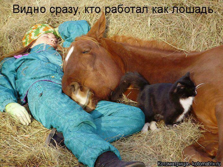 Котоматрица: Видно сразу, кто работал как лошадь.