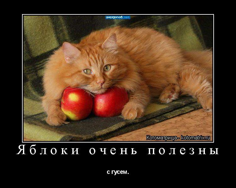 Котоматрица: Яблоки очень полезны с гусем.