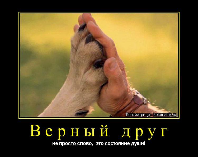 Котоматрица: Верный друг не просто слово,  это состояние души!