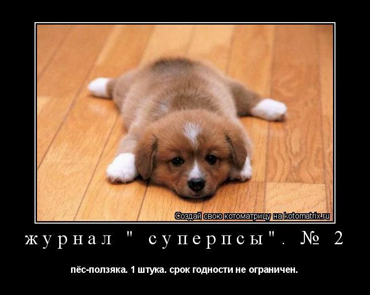 """Котоматрица:  журнал """" суперпсы"""". № 2 пёс-ползяка. 1 штука. срок годности не ограничен."""