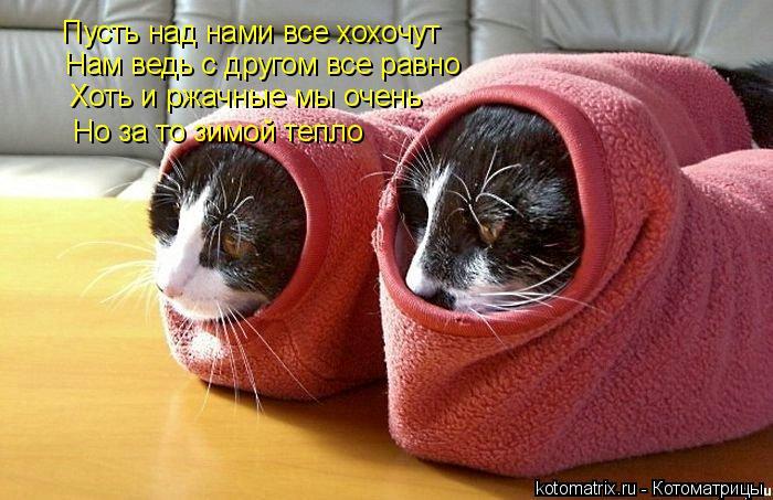 Котоматрица: Пусть над нами все хохочут Нам ведь с другом все равно Хоть и ржачные мы очень Но за то зимой тепло