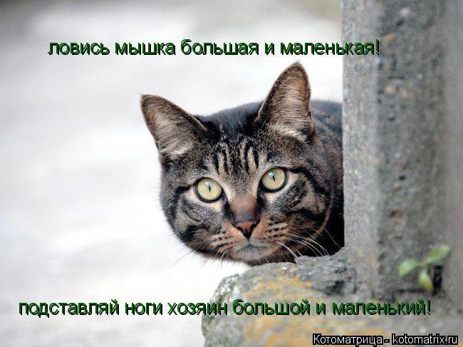 Котоматрица: ловись мышка большая и маленькая! подставляй ноги хозяин большой и маленький!