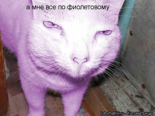 Котоматрица: а мне все по фиолетовому